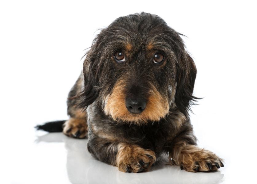 """""""No Dog Area"""" – einstweilige Verfügung gegen einen ins Büro mitgebrachten Hund?"""